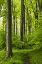 Forest Path In A Beautiful Springtime Beech Forest, Extertal, Teutoburg Forest, Germany