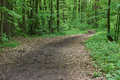 Forest path. Cloudy day. Royalty Free Stock Photo