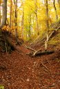 Forest path covered by leaves Stock Image