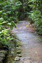 Forest path a dirt pathway through a dense tropical rain leading into darkness Stock Image