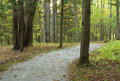 Forest path fall landscape trees tranquil scene Royalty Free Stock Photo