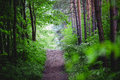 Forest path magic symbol for the right way into future Royalty Free Stock Photos