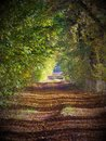 A forest path in the morning light Royalty Free Stock Photo