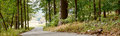 Forest Path Panorama Banner Background Royalty Free Stock Photo