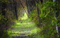 Forest Path in spring Royalty Free Stock Photo