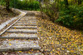 Forest path with stairs Royalty Free Stock Photo