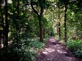 A forest path Royalty Free Stock Photo