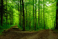 Forest path with two ways Royalty Free Stock Photo