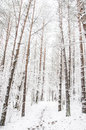Forest path in the winter Royalty Free Stock Photo