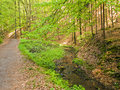 Forest paths saxon switzerland germany Stock Photos