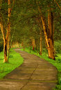 Forest pathway Royalty Free Stock Photo