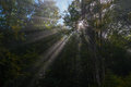 Forest penetrated with sunbeams Royalty Free Stock Photo