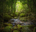 Forest photography tropical jungle lanscape Stock Photography