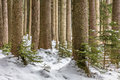 Forest picture of taken in the austrian alps Royalty Free Stock Photo