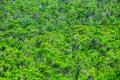 Forest pine tree leaves texture selvaggio Fotografia Stock Libera da Diritti