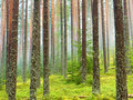 Forest after rain Royalty Free Stock Photography