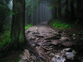 Forest after rain dark and gloomy background Royalty Free Stock Image