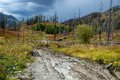 Forest recovering after a fire in the mountains of altai kazakhstan Stock Photography