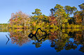 Forest reflections in pond water on a sunny autumn day Stock Photos