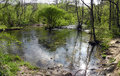 Forest river in the beautiful spring day sunny Royalty Free Stock Photo