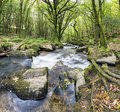Forest river the fowey flowing over mossy boulders at golitha falls on the southern aedge of bodmin moor in cornwall Stock Images