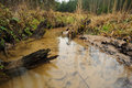 Forest rivulet with three stumps in winter long exposure lithuania europe Royalty Free Stock Image
