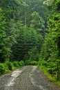 Forest road Stock Photography