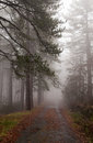 Forest road in fog emoty during winter at troodos mountains cyprus Royalty Free Stock Photos