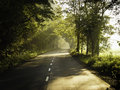 forest road illuminated by streaks of light Royalty Free Stock Photo