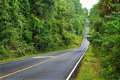Forest road at Khaoyai National Park Royalty Free Stock Images