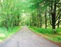 Forest road landscape in summer day Stock Photography