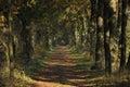 een bosweg in het park Royalty Free Stock Photo