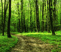 Forest road in the morning wild nature shot Royalty Free Stock Photo