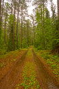 Forest Road on a Rainy Day Royalty Free Stock Photo