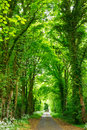Forest road scenic through green in england Stock Photos