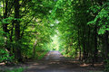 Forest road through a in spring Stock Photography