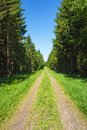 Forest road with spruce trees lined Royalty Free Stock Photo