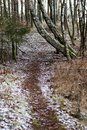A forest road in a wooded area. Pine forest and the road between the trees. Forest in the winter. Royalty Free Stock Photo