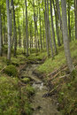 Forest on ruegen island germany Stock Photo