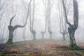 Forest with scary trees gloomy Royalty Free Stock Photo
