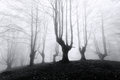 Forest with scary trees spooky in black and white Stock Image