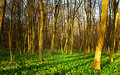 Forest scene Stock Image