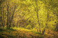 Forest scene pastoral comme renoire Images stock