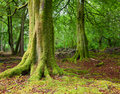 Forest in Scotland Royalty Free Stock Photo