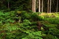 Forest seclusion Stock Images