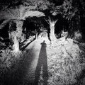 Forest shadow cast by photographer in Royalty Free Stock Photo