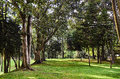 Forest in the Simon Bolivar Park Royalty Free Stock Photo