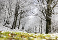 Forest with snow passo del lagastrello tuscany italy Royalty Free Stock Images