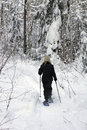Forest snowshoeing Stock Photography