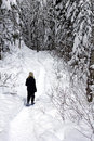 Forest snowshoeing Royalty Free Stock Image